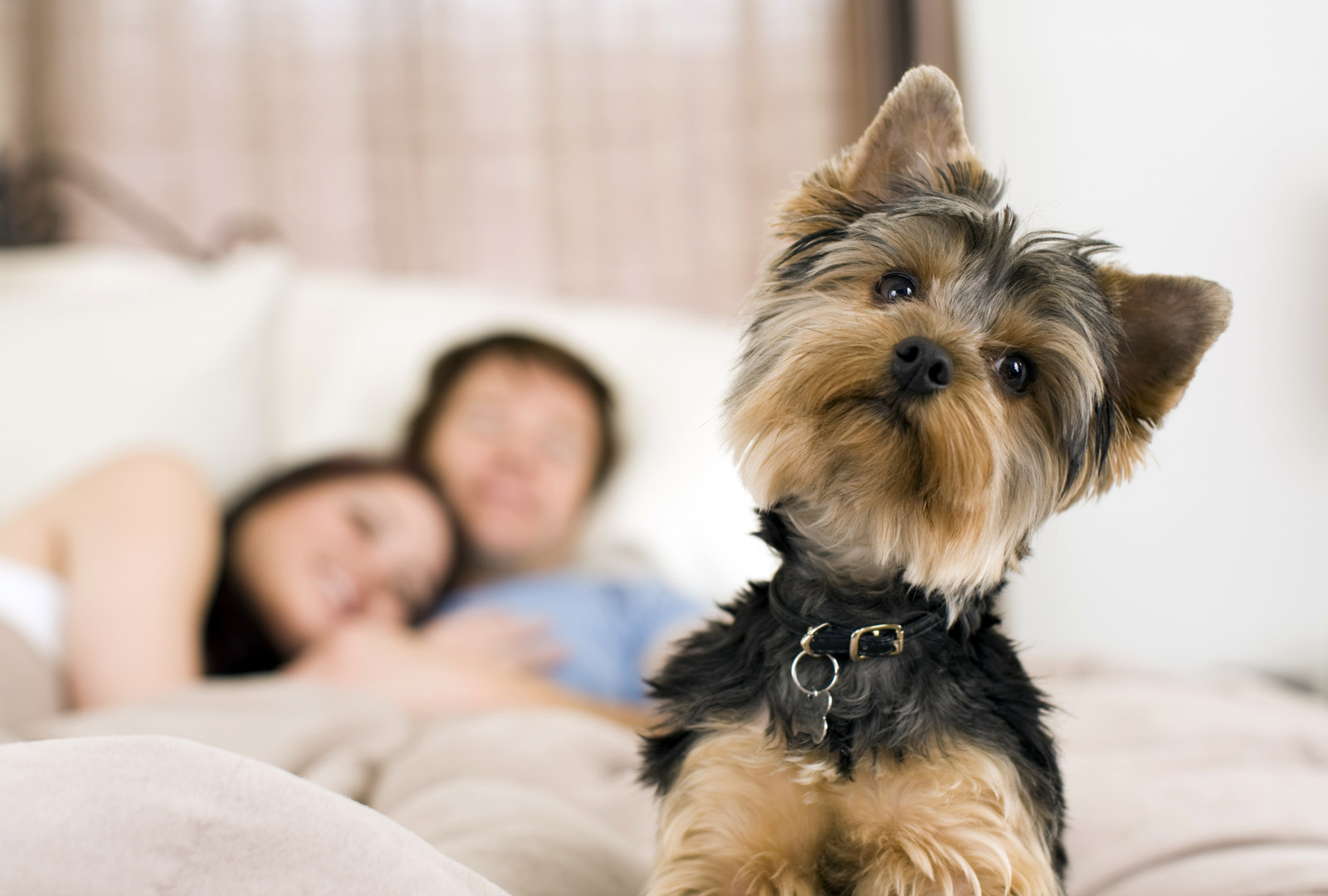 Choosing the Best Pet Insurance for Your Dog