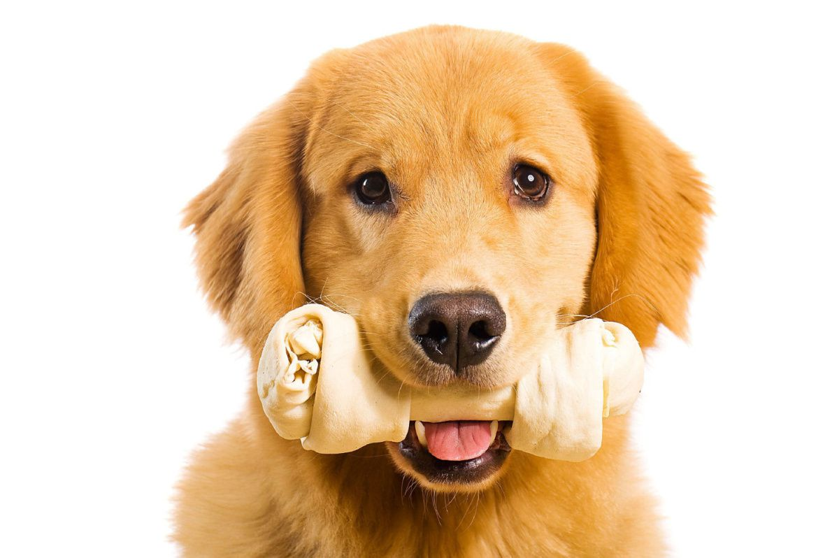 Pet Health Insurance - What It Is and How It Is Beneficial