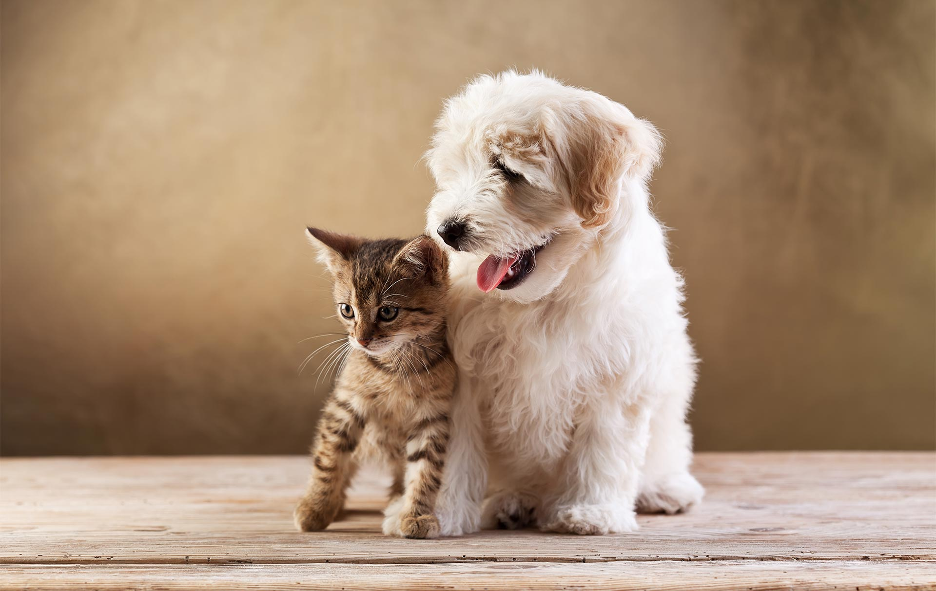 Why You Should Get Insurance for Your Pets